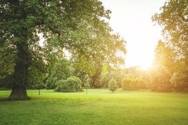Kompetente und gründliche Grünflächenpflege - eine Leistung der Gebäudereinigung Reils und Wahl in Mettmann.