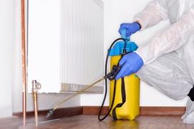 In der qualifizierten Schädlingsbekämpfung der Gebäudereinigung Reils und Wahl aus Mettmann haben Gesundheit und Umwelt Vorrang.